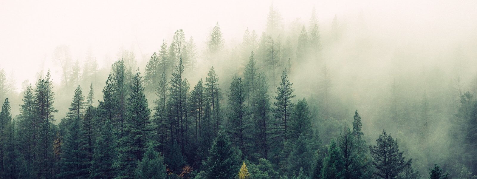 Wald düster