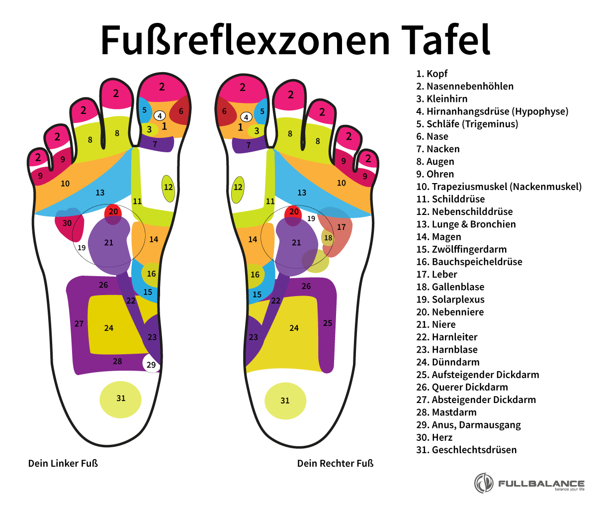 Fußreflexzonenmassage Punkte Zonen Tafel Illustration