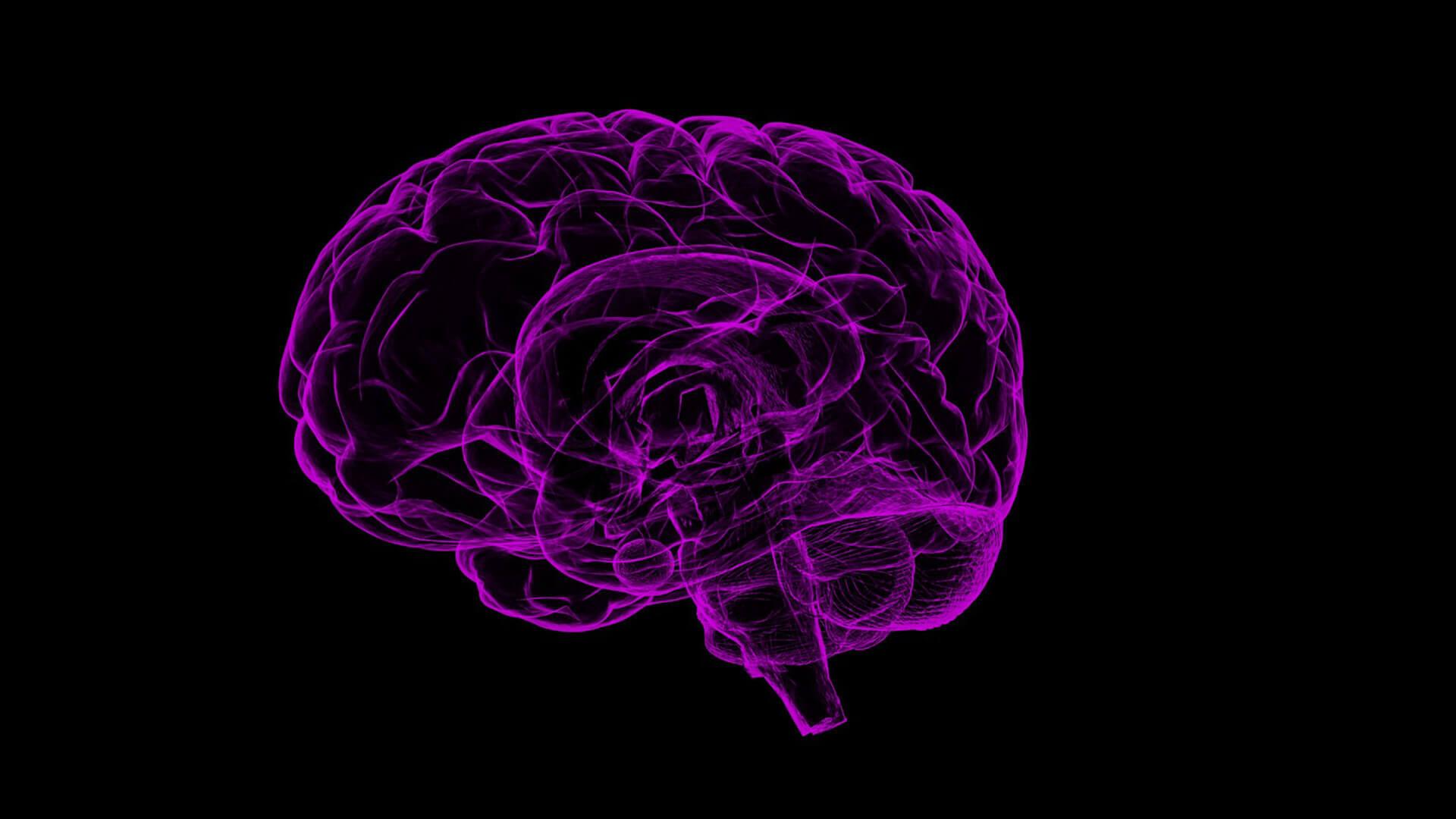 CBD Schlüssel zum Gehirn