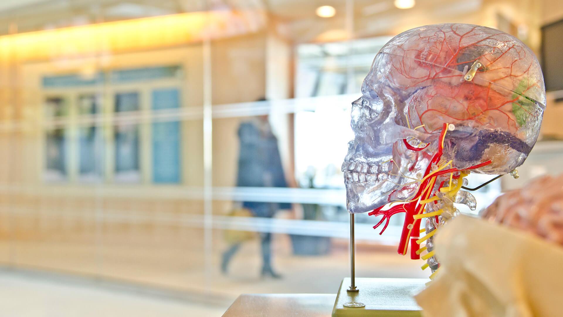 Studie: Wie erscheint CBD auf Erkrankte mit einer Angsterkrankung?
