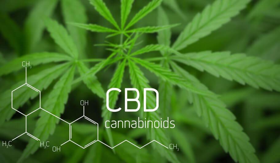 Die Heilkraft einer alten Pflanze - Cannabis CBD